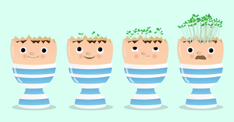 Cress Egg Heads - What you will need | Raspberry Pi Projects